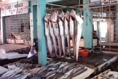Pesca Artesanal San Antonio